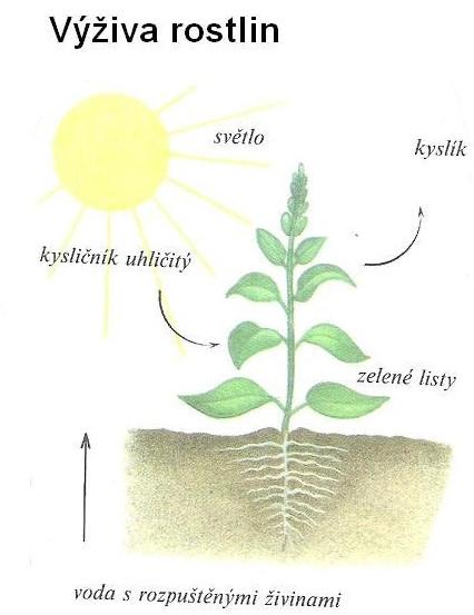 fotosyn3